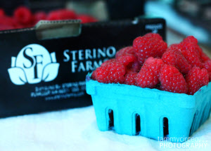 sterino farms